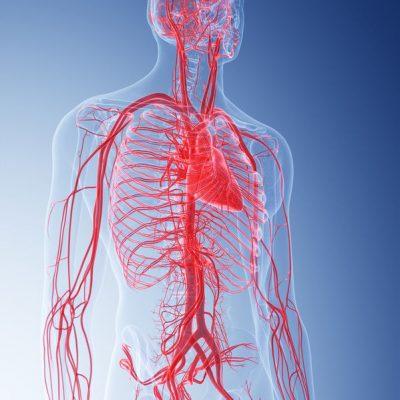Doppler jamy brzusznej (aorty i tętnic trzewnych)