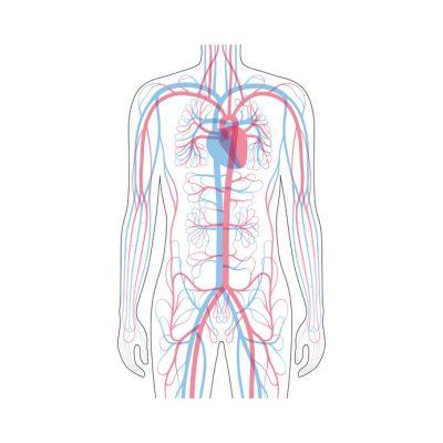 Doppler żył/tętnic wlotu klatki piersiowej